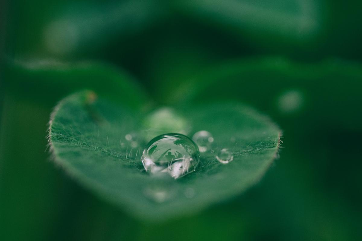 BragaCool_Blog_GreenFest - O Maior Evento Nacional de Sustentabilidade